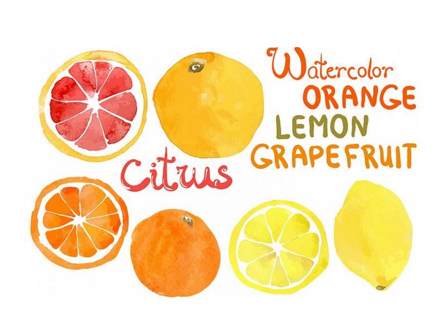 citrus watercolor vectors fruits