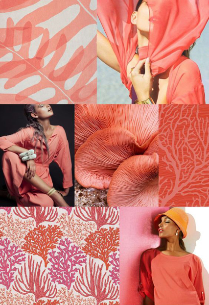 living-coral-example-1