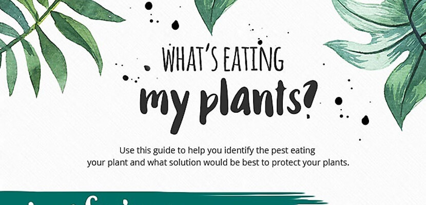 The Best Infographic Designs for 2019 - How To Stop What's Eating Your Garden