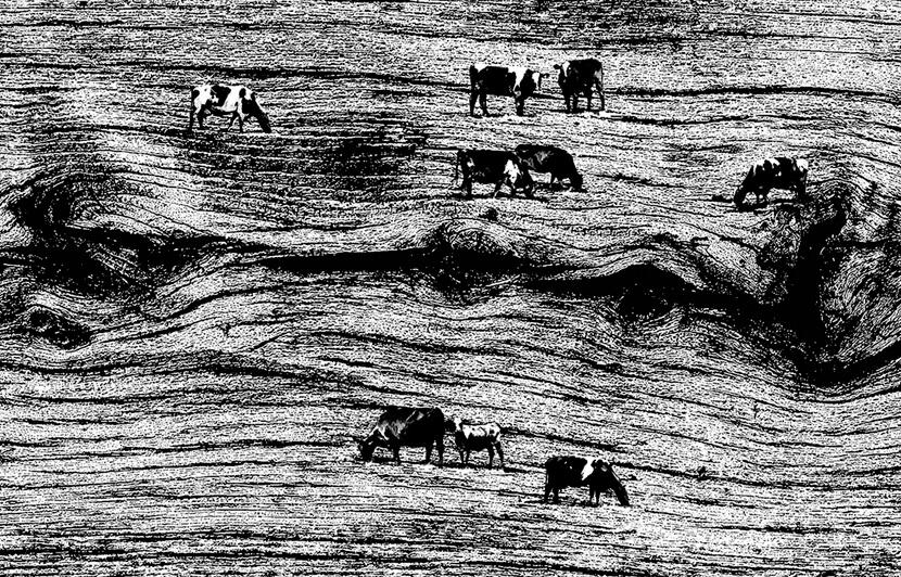 Unique Grut black and white illustration