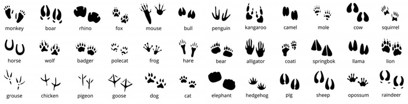 Free Animal Footprints Silhouettes Set