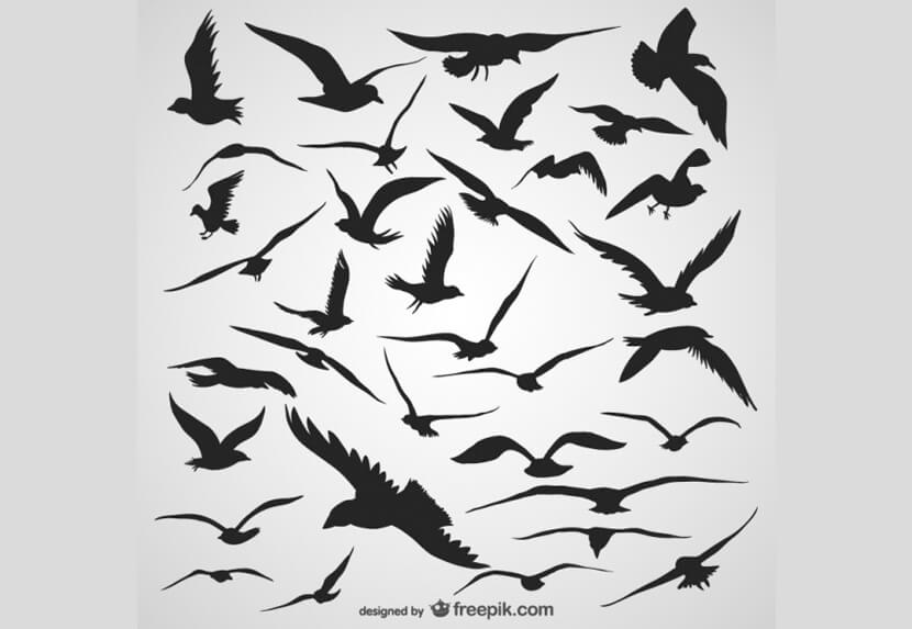 Free Flying Birds Silhouettes Set