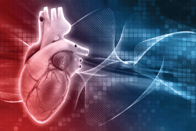 free realistic 3D human heart background