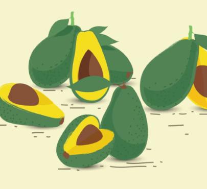 Free avocado illustration: Avocado Fruits