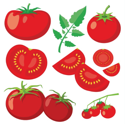 Free tomato illustration: Fresh Tomatoes