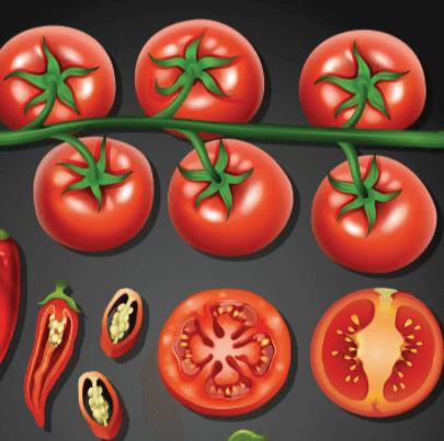 Free Tomato illustration: Tomato and Chilly Set