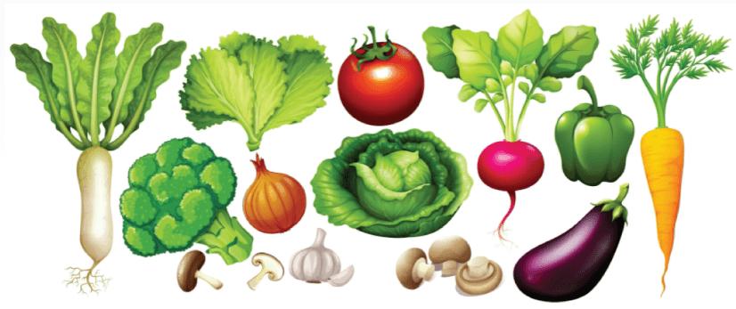 free vegetables illustration: Different Types of Vegetables
