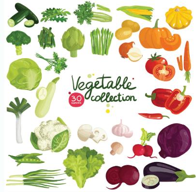 free vegetables illustration: Vegetables and Herbs
