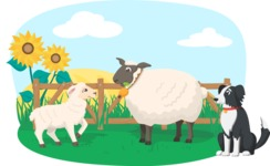 Animals: On The Farm - Sheep on the Farm