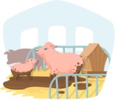 Animals: On The Farm - Pigs in the Piggery