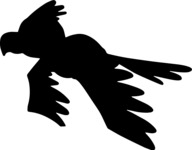 Flying Parrot Silhouette
