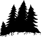 Evergreen Forest Silhouette