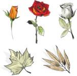 Vector Hand Drawn Elements Mega Bundle - Hand Drawn Flowers Vector Set