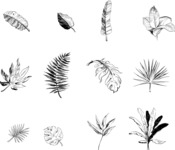 Nature Backgrounds, Patterns and Frames Themed Graphic Collection - 12 Vector Hand Drawn Exotic Leaves