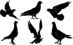 Vector Silhouettes Mega Bundle - 6 Vector Pigeon Silhouettes Set