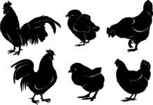 Vector Silhouettes Mega Bundle - 6 Vector Chicken Silhouettes Set