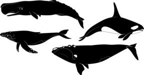 Vector Silhouettes Mega Bundle - Vector Whale Silhouettes Set