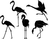 Vector Silhouettes Mega Bundle - Vector Flamingo Silhouettes Set