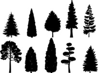 Vector Silhouettes Mega Bundle - Detailed Vector Tree Silhouettes Set