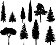 Vector Silhouettes Mega Bundle - Vector Pine and Evergreen Trees Silhouettes Set