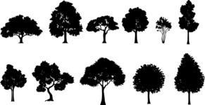 Vector Silhouettes Mega Bundle - Detailed Deciduous Tree Silhouettes