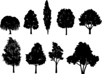 Vector Silhouettes Mega Bundle - Transparent Deciduous Trees Vector Silhouettes