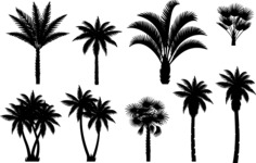 Vector Silhouettes Mega Bundle - Vector Palm Silhouettes Set