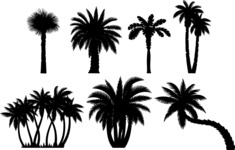 Vector Silhouettes Mega Bundle - Palm Tree Silhouettes Vector Set