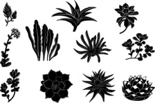 Vector Silhouettes Mega Bundle - Vector Succulents Silhouettes Set