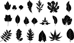 Vector Silhouettes Mega Bundle - 20 Transparent Leaf Silhouettes Vector Set