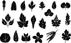 Vector Silhouettes Mega Bundle - Transparent Silhouettes of Leaves Vector Set