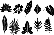 Vector Silhouettes Mega Bundle - Tropical Leaf Silhouettes Vector Set
