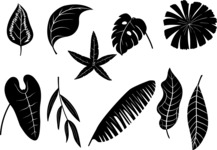Vector Silhouettes Mega Bundle - Vector Tropical Leaves Silhouette Set