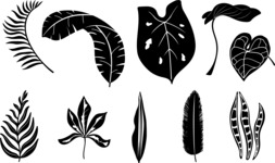 Vector Silhouettes Mega Bundle - Transparent Tropical Leaf Silhouettes Set