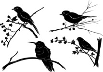 Vector Silhouettes Mega Bundle - Vector Birds on Branch Silhouettes Set